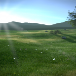 grass-finished-scene